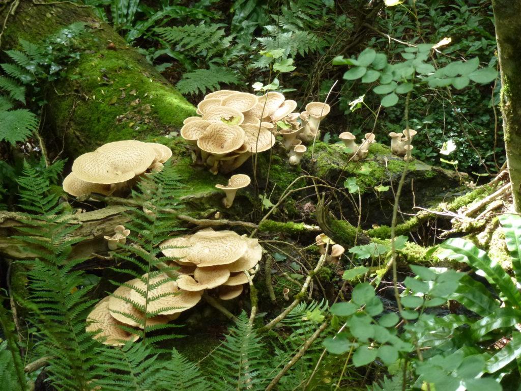 wales mushrooms